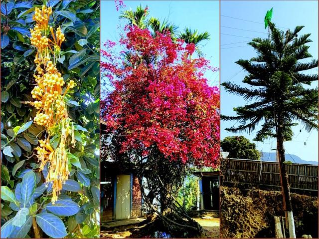 tamenglong-flowers-an-plants