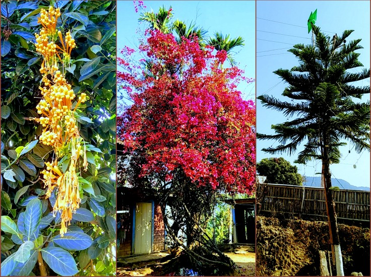 tamenglong-flowers-an-plants